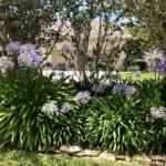 Linda Thomas Inverness Fl Real Estate Bluealliumspy