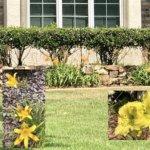 Linda Thomas Inverness Fl Real Estate Daylilies