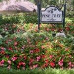 Linda Thomas Inverness Fl Real Estate Pinetreebgo
